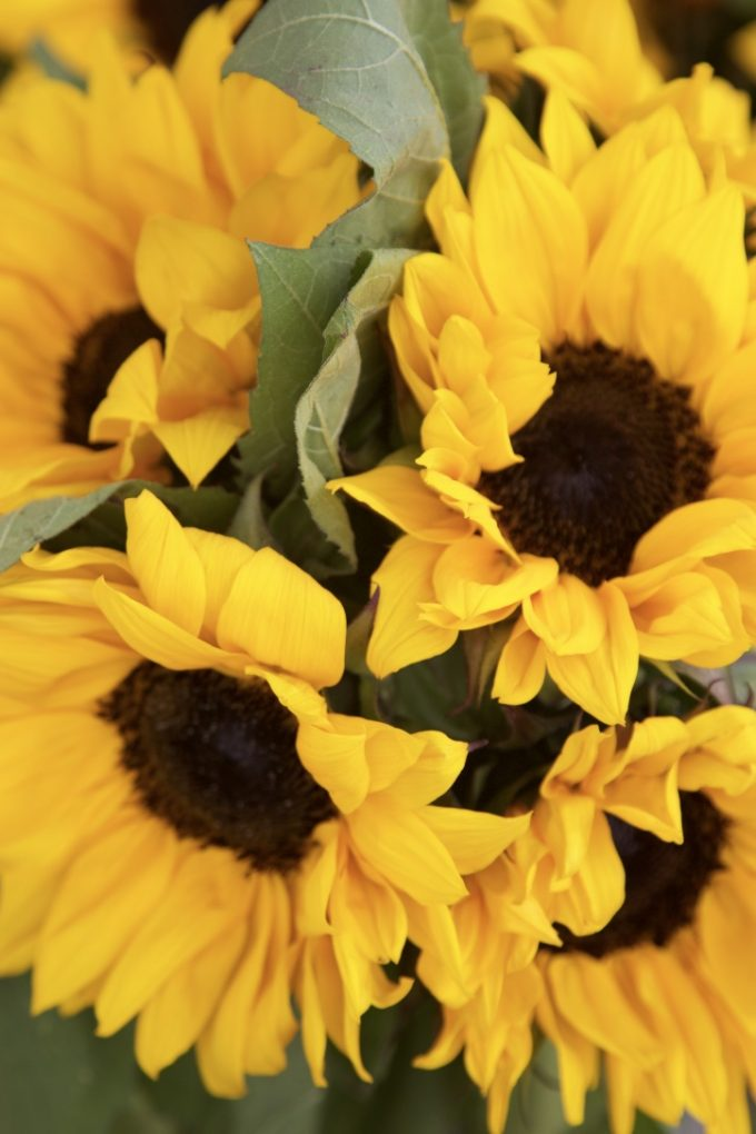 San Juan Capistrano Certified Farmers Market Sunflowers for Sale
