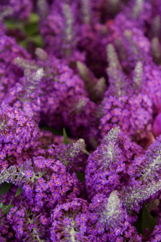 San Juan Capistrano Certified Farmers Market butterfly bush