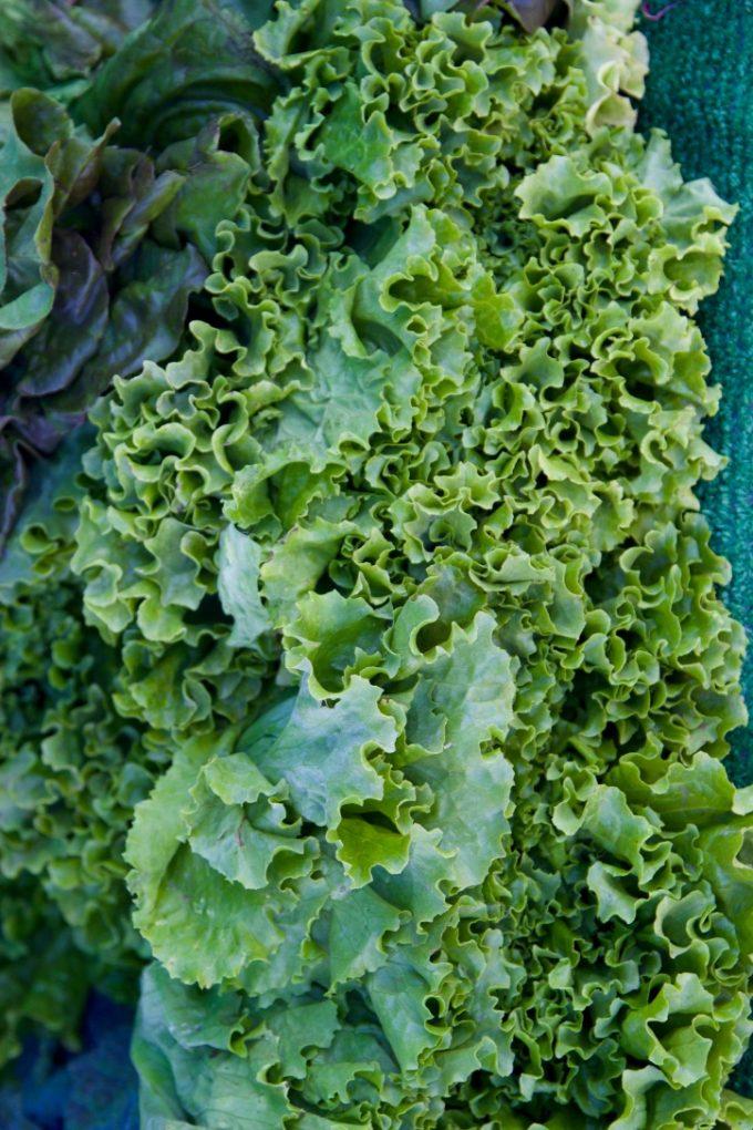 San Juan Capistrano Certified Farmers Market lettuce