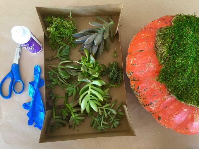 Fall Succulent Topped Pumpkin Centerpieces box