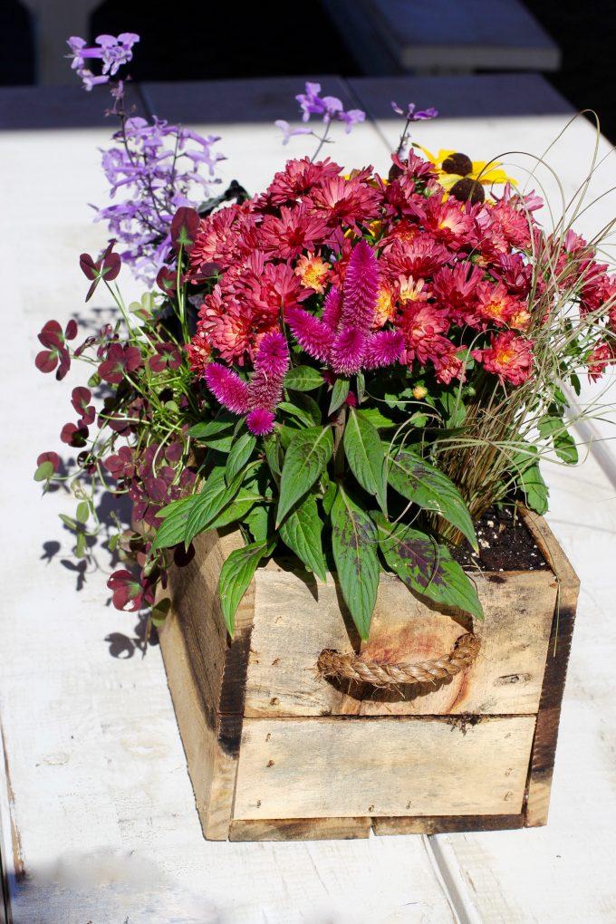 Magnolia Market At The Silos | Chip & Joanna Gaines ~ HGTV Fixer Upper purple flowers