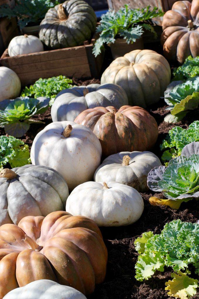 Magnolia Market At The Silos | Chip & Joanna Gaines ~ HGTV Fixer Upper pumpkins