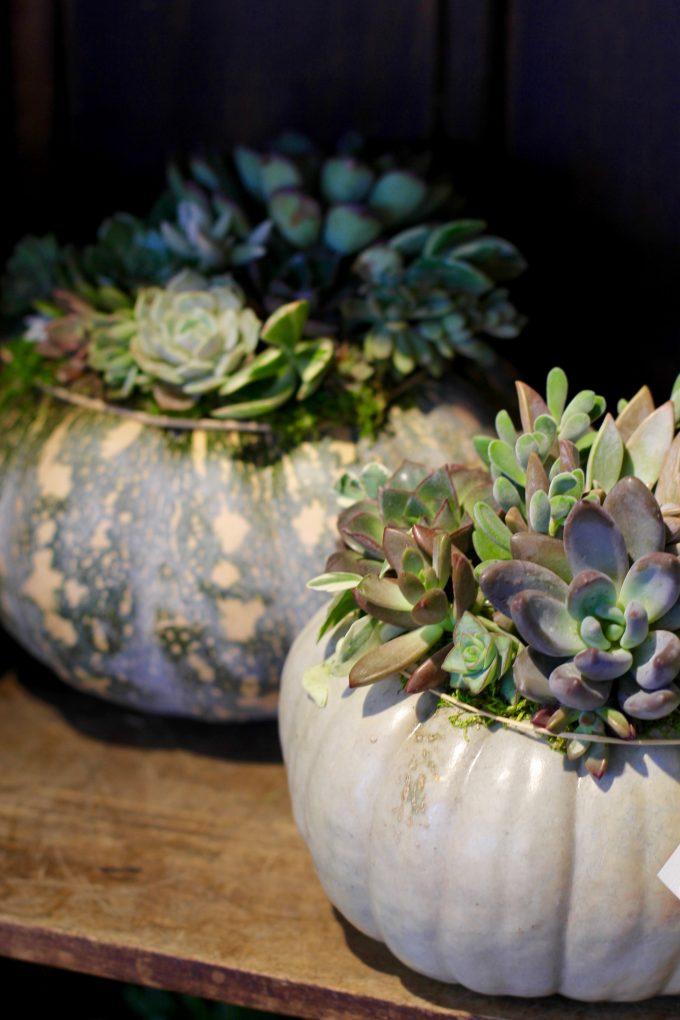 Fall Succulent Topped Pumpkin Centerpieces pumpkins
