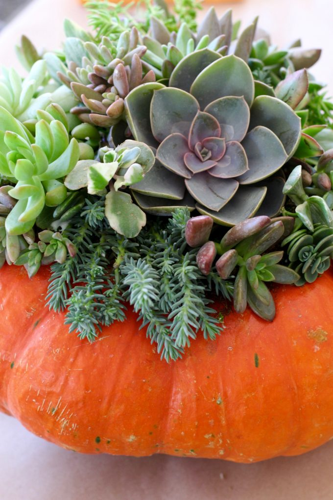 Fall Succulent Topped Pumpkin Centerpieces mine 3