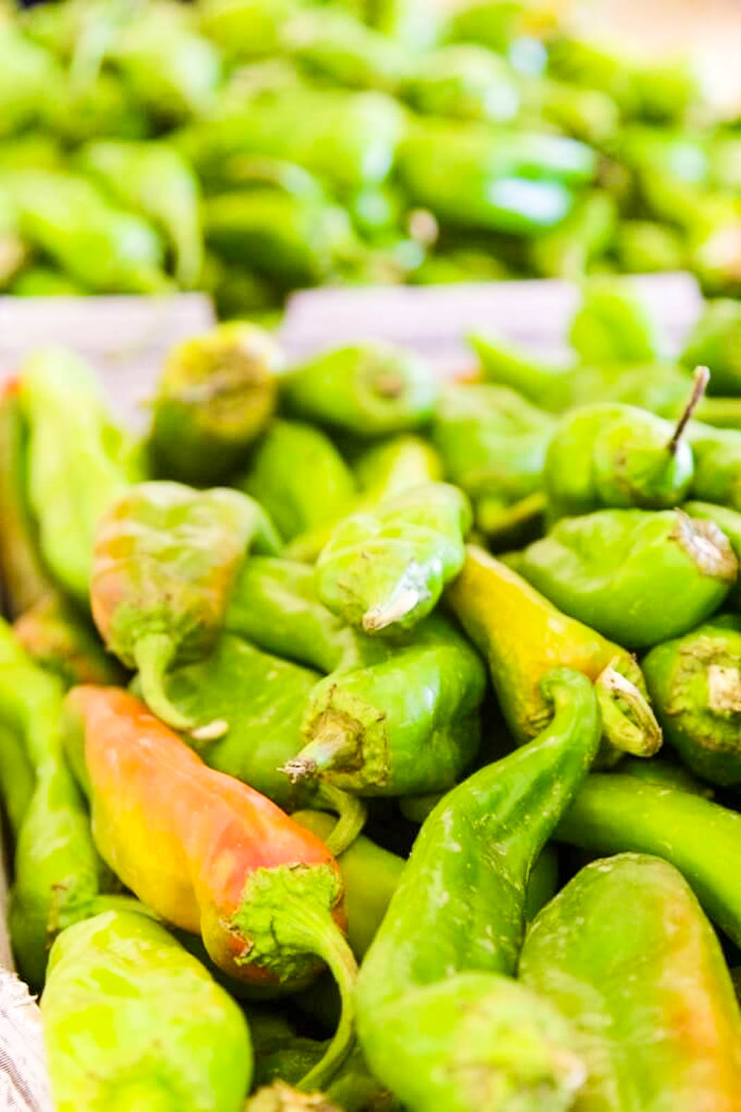 A pile of fresh green Hatch-Chiles to use in Recipes close up
