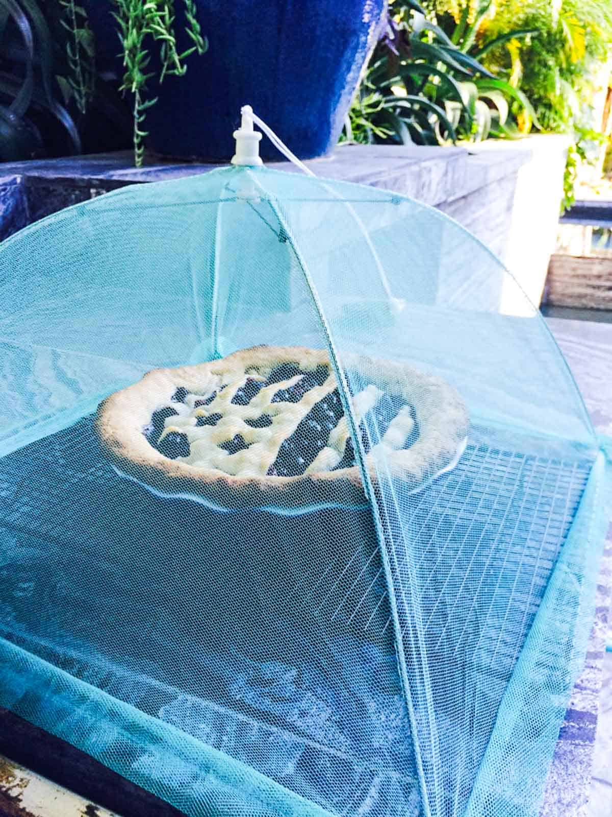 A freshly baked blueberry pie with a flag shaped crust with a food tent over it cooling.